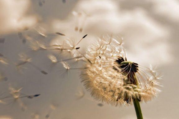 Air Dandelion Playmat
