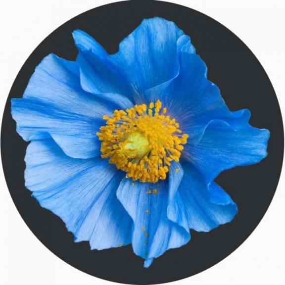 Blue Flower Circular Mat