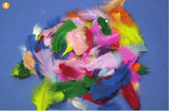 Colour Feathers