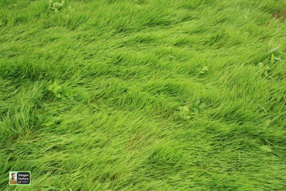 Grass Playmat
