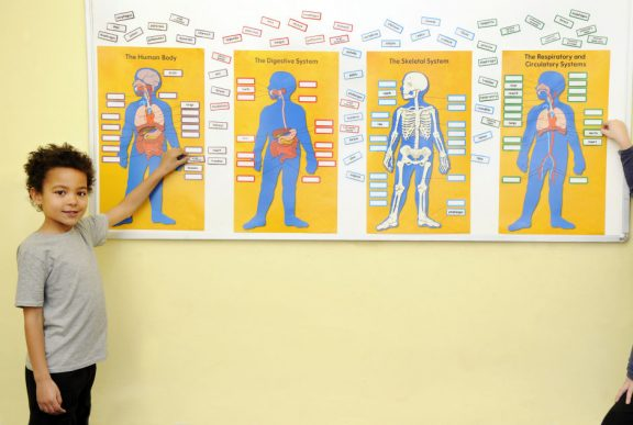 Human Body Bulletin Board Pack